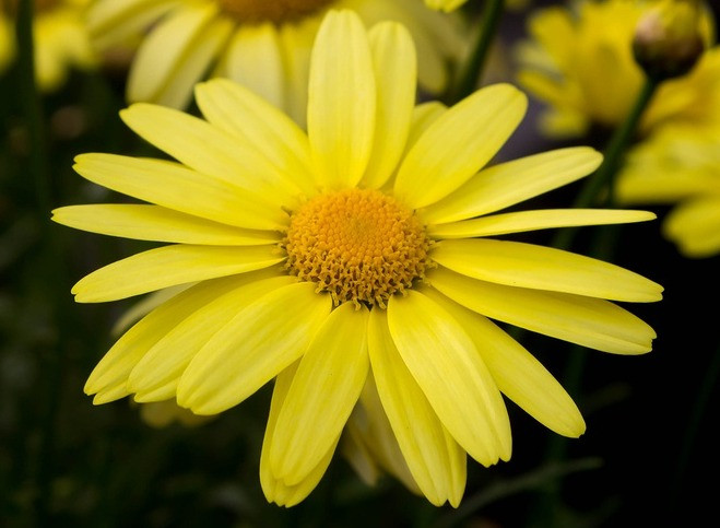 Arnica Flower, HealFast, Surgery recovery supplements, pain control