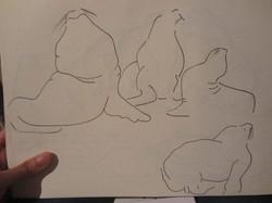 Dibujo lobos marinos