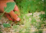 grüner Daumen