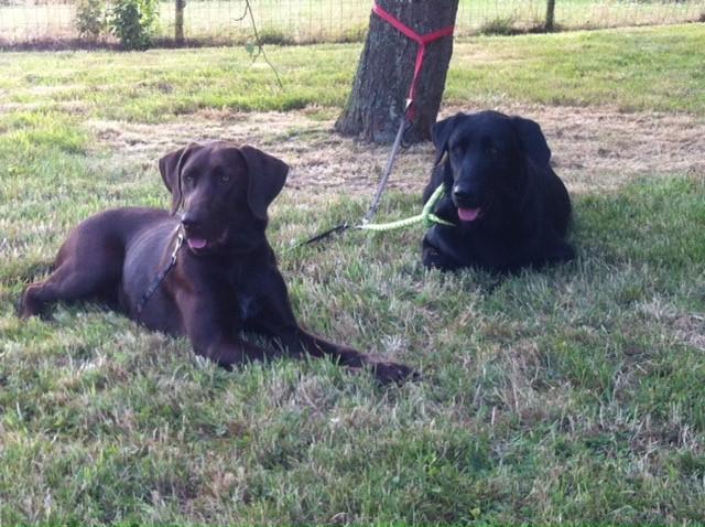 Trainen onder het waakzame oog van onze hondjes!