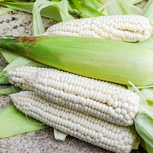 CORN (LUTHER HILL)