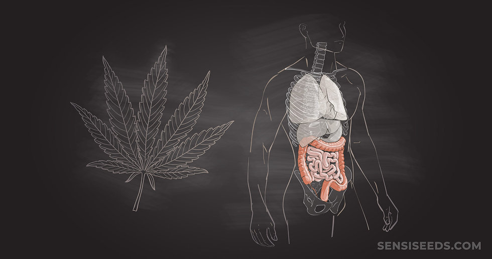 cannabis-and-the-digestive-system-scaled