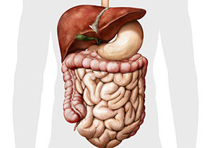 Human-digestive-system-featured.jpg