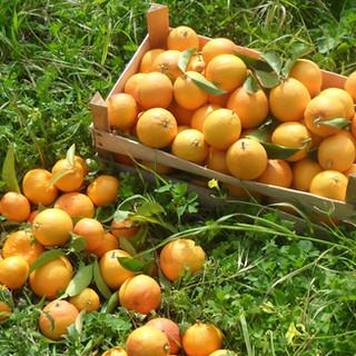 Orangecrate.jpg