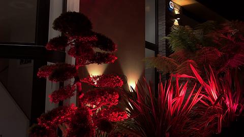 light panted plants