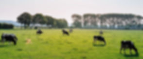Cattle in Pasture_edited_edited.jpg