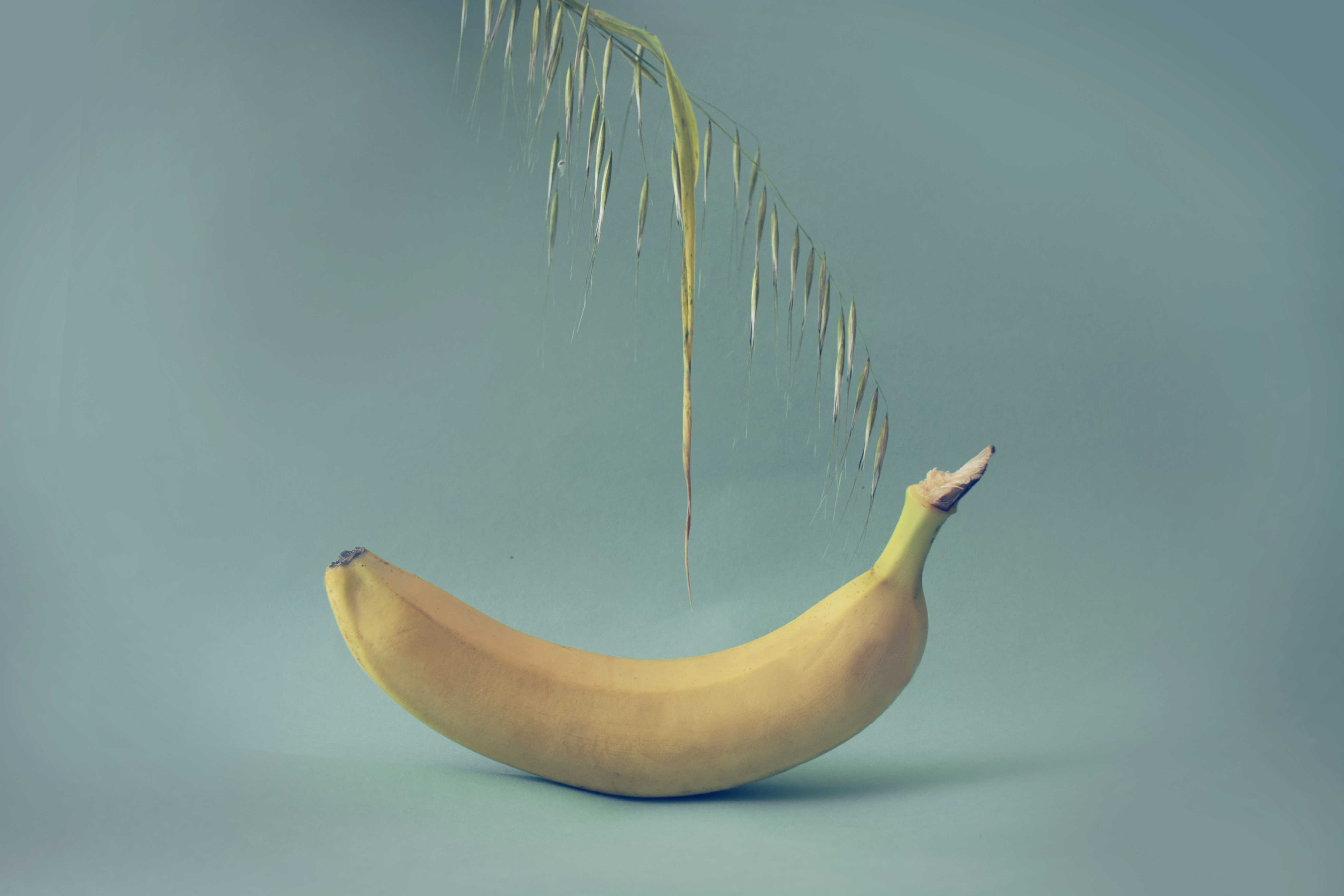 Wheat Banana