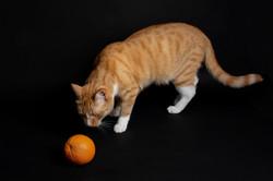 Oh I'm orange too