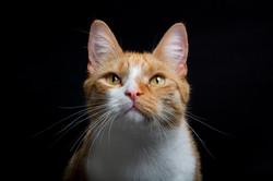 Einar portrait