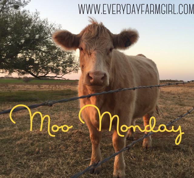 #MooMonday