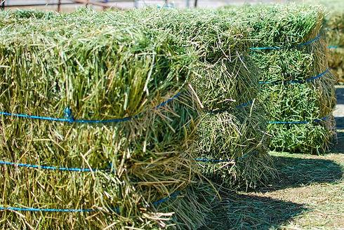 alfalfa-hay-bales.jpg