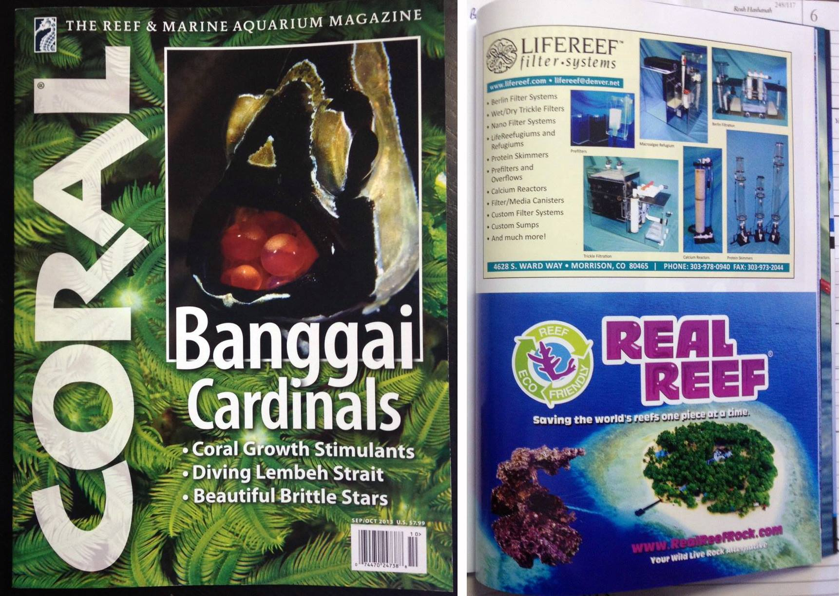 Real Reef half page print ad