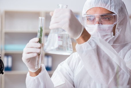 scientist working wit cbd