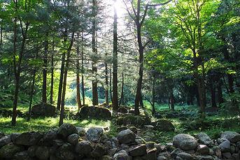 forest1 full.jpg