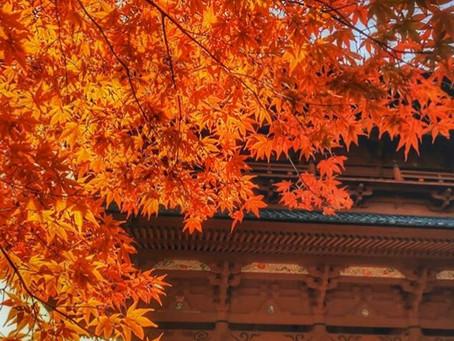 紅葉の高野山。