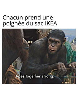 Copie de Apes Together Strong IKEA