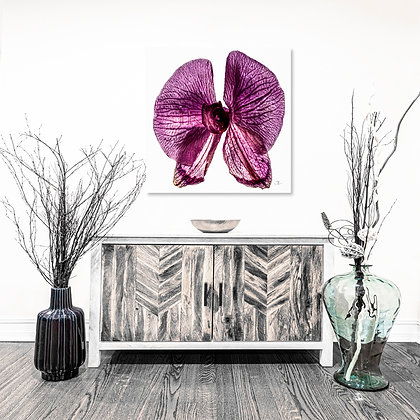 Square Wall Art - Butterfly Orchid