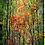 Thumbnail: Reforestation | Portrait Art