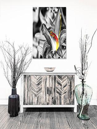 Portrait Wall Art - Fire Flower
