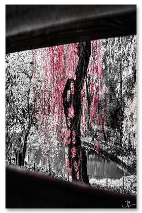 Portrait Wall Art - Pink Cherry Willow