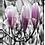 Thumbnail: Magnolia Tree | Portrait Art