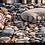 Thumbnail: Beach Stones   Panoramic Art