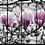 Thumbnail: Magnolia Tree | Landscape Art