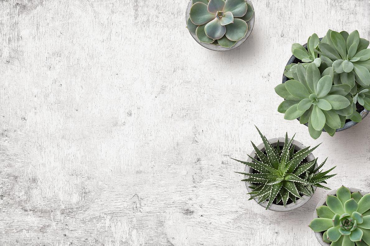 minimalist urban gardening or stylish in