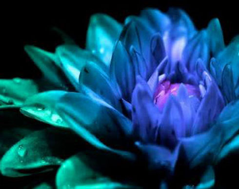 Blue_Flower.jpg