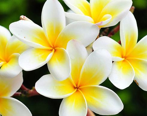 flower_whitePrice.jpg