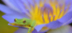 frog on purple flower.jpg
