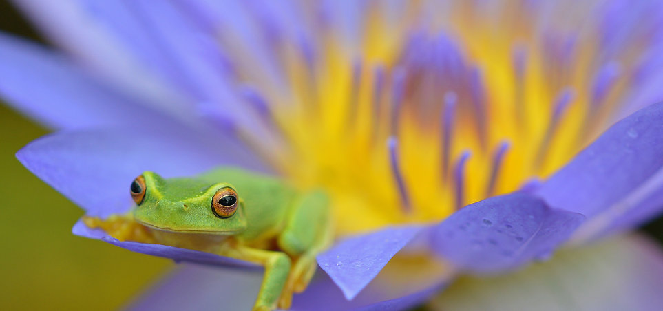 frog on purple flower.jpg