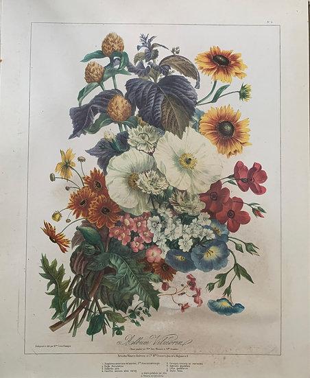 Lithographie Elisa Champin