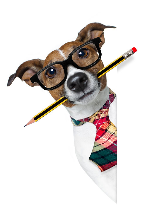 Dog With Pencil At The Office.jpg