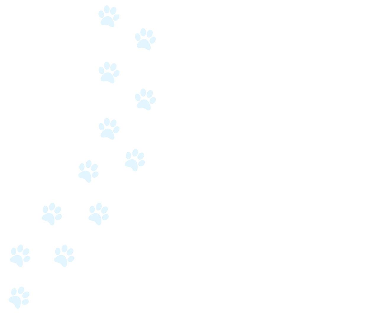 Background Web Paw Prints Blue.jpg