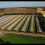 mink farm.jpg