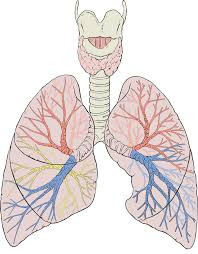 """""""Metabolic syndrome, type 2 diabetes affect lung capacity"""""""