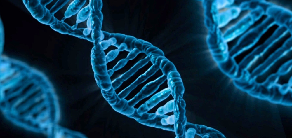 RCAN1 gene could be responsible for onset of type 2 diabetes