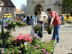 fruehlingsfest-900000642-23910-11.jpg