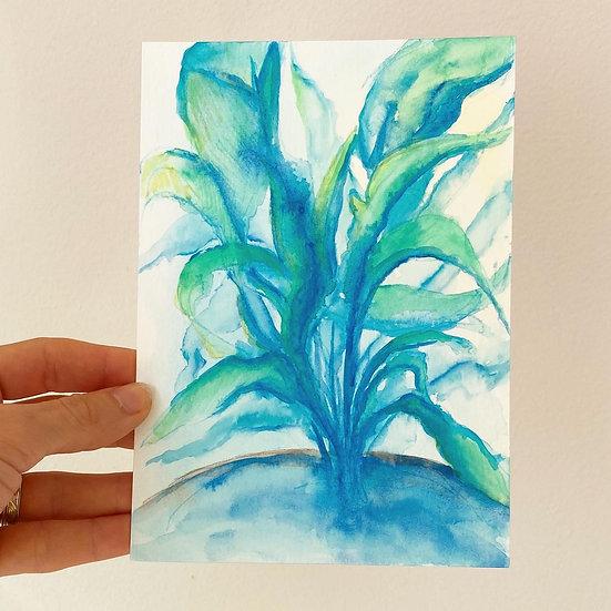 Plant leaves study