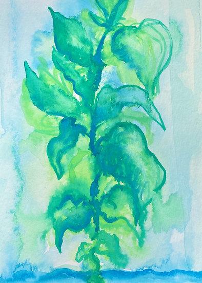 Growing plant study