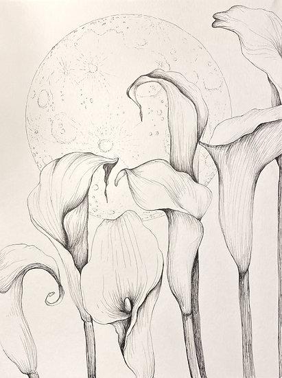 Calla Lillies & Moon drawing