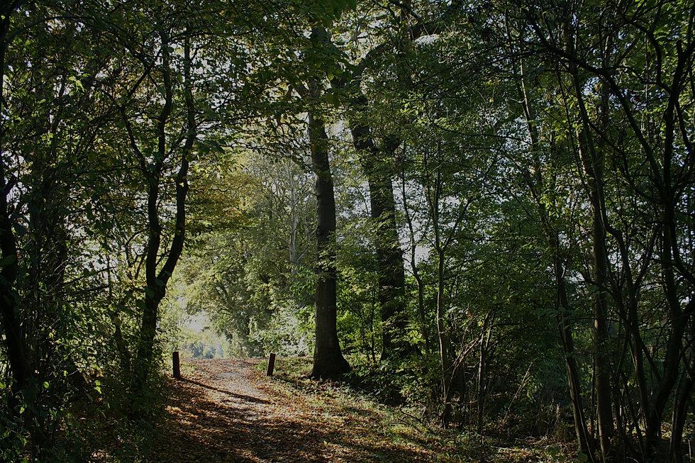Wald voller Bäume