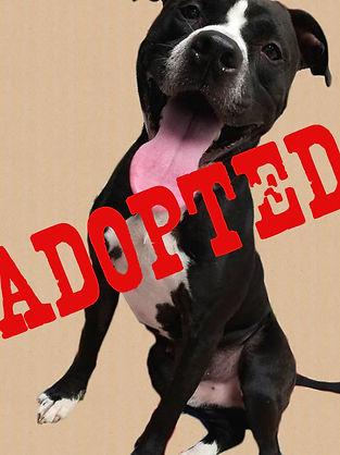 Major-Adopted.jpg