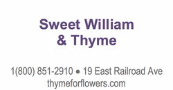 Sweet William _ Thyme