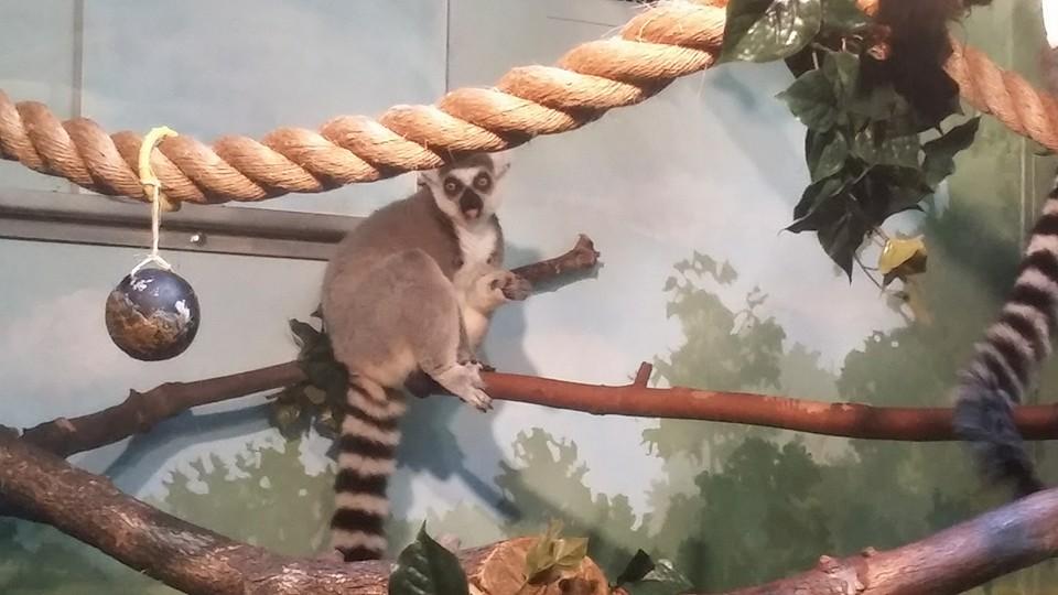 Akron Zoo_23