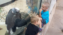 Akron Zoo_21