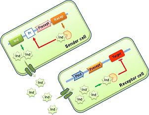 Figure-6-Design-of-synthetic-quorum-sensing-in-consortium-of-bacteria-Notes-The-sender.png