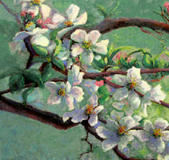 Flowering Apple Branches