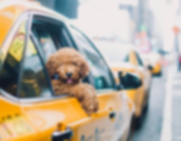 dog-in-taxi.png